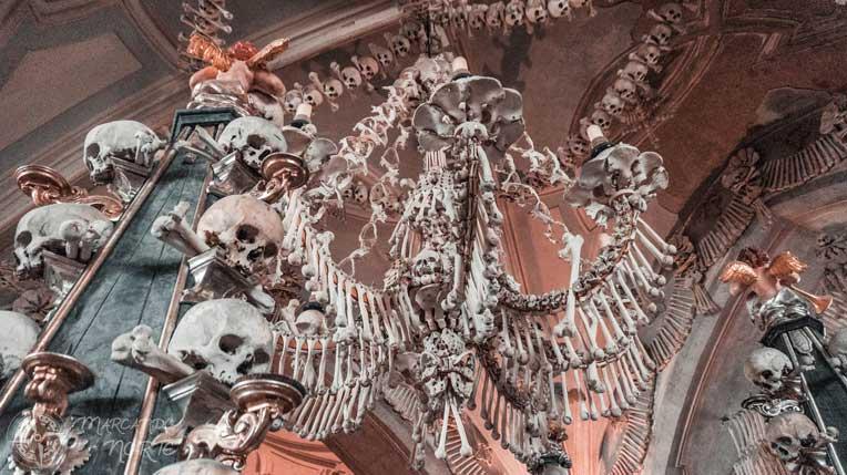 Araña de huesos